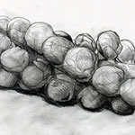Brussel Sprouts drawing by Ruth deMonchaux